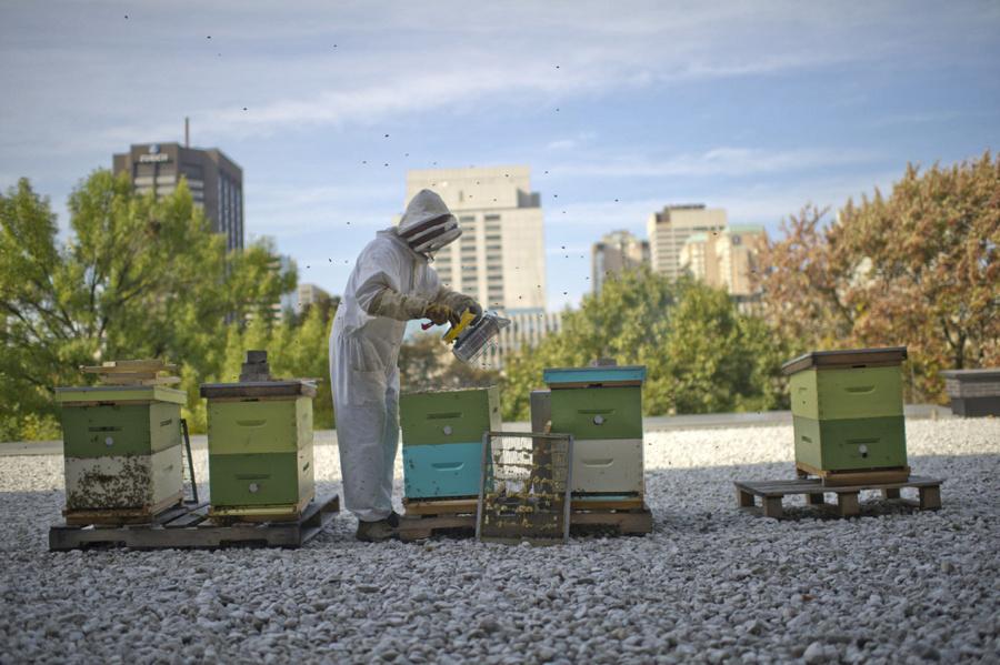 Albinele urbane