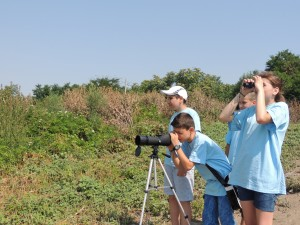 Observation ornithologique sur les bords de Mostiștea – Photo David Ovidiu
