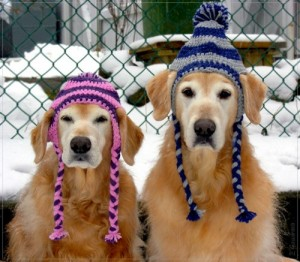 clinicnewsimage_429_300_dogs_are_ready_for_winter